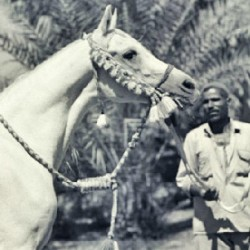 Nazeer was often photographed wearing the distinctive blue and white halter.