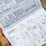 Horse passports contain detailed physical descriptions and information about vaccines and medications.