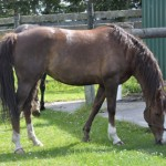 Healthy horse: owners should manage their horses to keep them in the optimal range of 4 to 7.