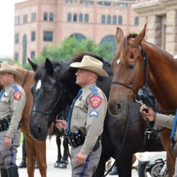 New mounted unit for Texas State Capitol