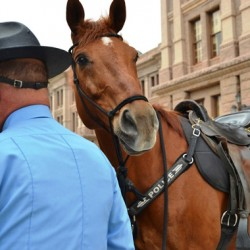 texas-mounted-4