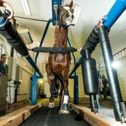 Major overhaul of equestrian centre for Rio 2016 Olympics