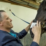 Colorado State University veterinary graduate Ed Blach applies the nasal strip he co-invented on Eli, a horse owned by Kat Fentiman. Photo: CSU