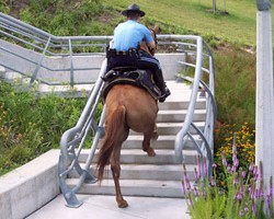 Validating the natural path: Houston Mounted Patrol's barefoot horses