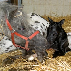 Mares totally relaxed when giving birth, research suggests