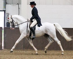 Conventional wisdom abounds at Crabbet arabian horse gathering