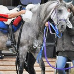 Hydration in horses: Staying cool can be crucial to success