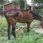 One of the seized horses. Photos: Florida SPCA