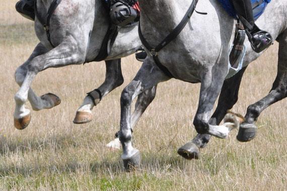 galope-piernas-endurance_2546