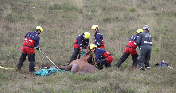 Fire fighters work a free the 12-year-old horse from boggy conditions. Photo: Hampshire Fire & Rescue