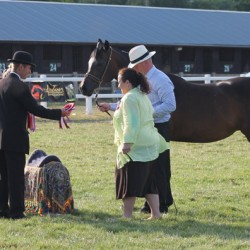 nats-alia-saddle_3842