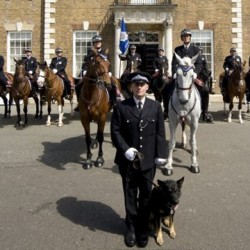 Police horses honoured for bravery during London riots