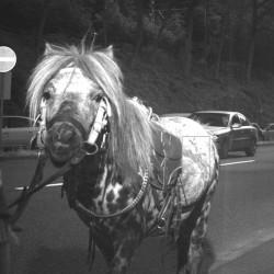Pony snapped on speed camera at 59kmh