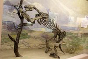 The giant sloth succumbed to the advance of humans. Photo: Wikimedia Commons
