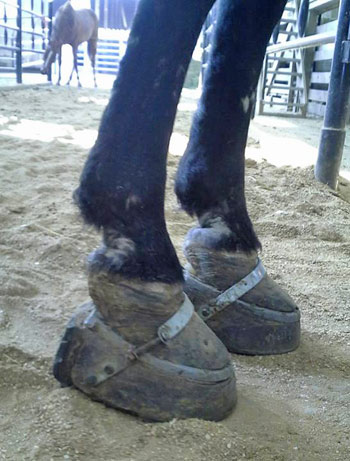 Dutch was bought from the New Holland auction with stacked shoes.