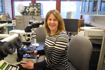 Dr Tracy Stokol has been investigating the role of EHV-1 in triggering potentially damaging clots.