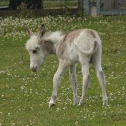 The Donkey Sanctuary's latest arrival weighs just 14kg.