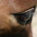 Horse ownership ban for breaching SPCA order