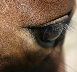 Two horses test positive for controlled medications at WEG