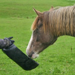 High-fibre diet best for equine hydration