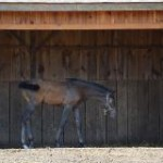 Ten tips to help horses cope with hot weather