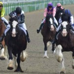 Earth moves as Shire horses race in Britain