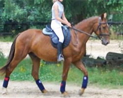Rusty's clone now under saddle