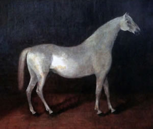 The grey Arabian stallion Smetanka is the ancestor of all Orlov Trotters.