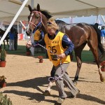 Lori Shifflett hopes the US team will medal at the 2014 Alltech FEI World Equestrian Games, such as this 2011 Pan Am bronze winner did in Chile.