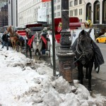 Carriage horses can be exposed to harsh conditions.