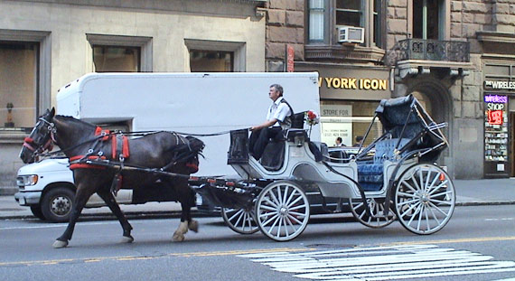 A carriage horse at work near Carnegie Hall in New York.
