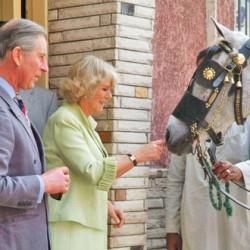 Royal welcome to equine charity Brooke USA