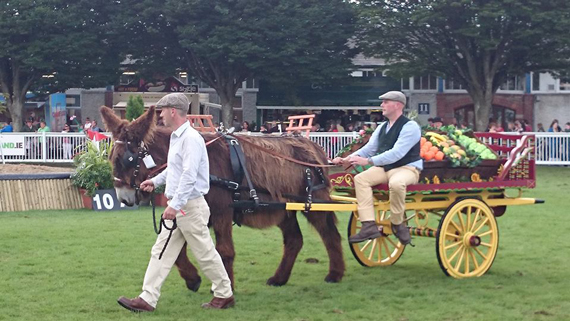 Ireland's largest donkey was at the show.