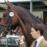 Harry Meade's Wild Lone collapses after WEG cross-country