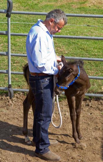 neil-foal