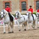 The magnificent percheron horses on parade.