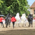 percherons2