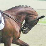 Two studies reveal undesirable elements of hyperflexion in horses