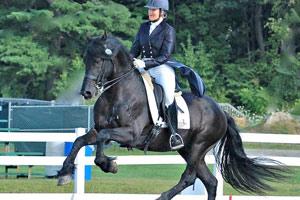 Friesian stallion Thys a dressage star in the making