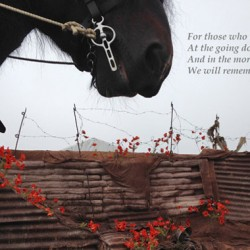 Remembering the horses of World War 1