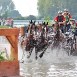 WEG: Exell drives into lead as Dutch team remain ahead