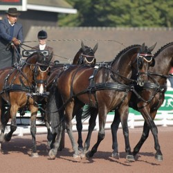 WEG Driving: Dutch reinsmen take early lead