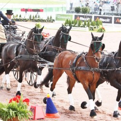 WEG Driving: Boyd Exell wins third consecutive World title