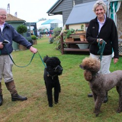 Where there are horses, there are often dogs. This pair enjoyed the Burghley Horse Trials with their owners, in a relaxed and controlled manor. But out of control dogs can cause great distress and injuries to horses.