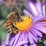 Wound-healing secrets of raw honey identified