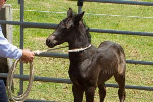 The horse as a 'prey' animal