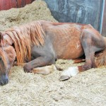 Boyd after he was rescued from a South Wales farm in 2011.