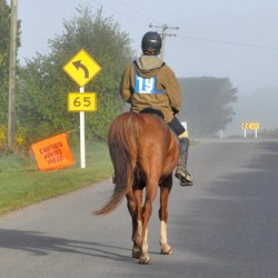 Trio honoured with Sefton awards for horse safety work