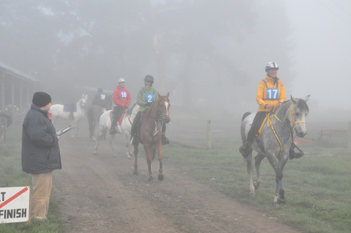 Horses in the mist: Endurance and trail-riding action