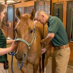 "Dr Luke Bass, a Colorado State University equine veterinarian, will be among the presenters of ""Coping with Colic in Horses""."